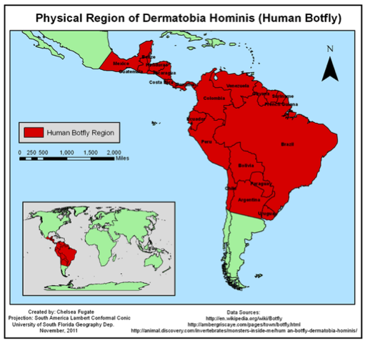 physical region of dermatobia hominis