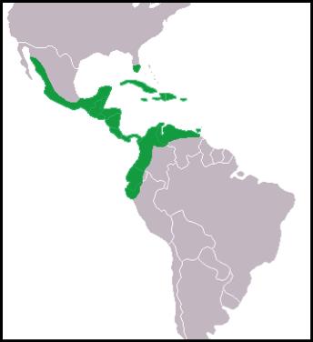 Range of the American Crocodile