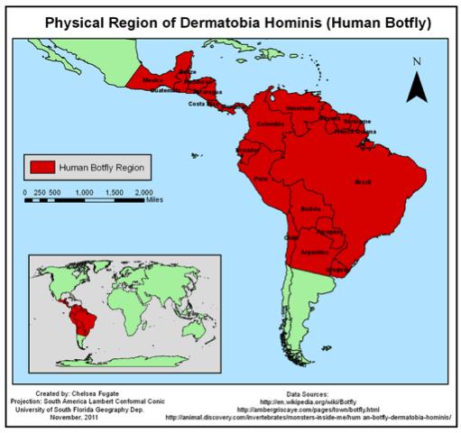 physical region of dermatobia hominis
